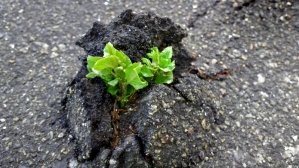Resilient-plant-still-living-800x450
